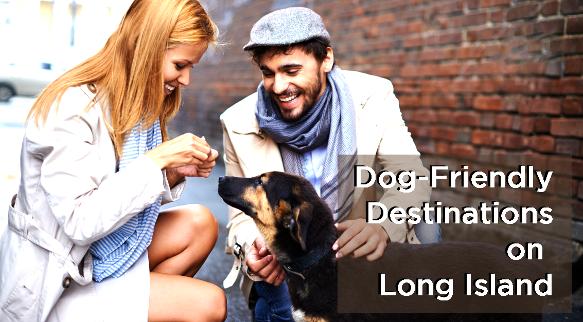 Best Dog-Friendly Destinations on Long Island | LIHC
